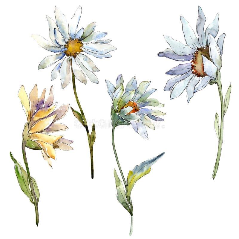 White daisy flower. Floral botanical flower. Isolated illustration element. Aquarelle wildflower for background, texture, wrapper pattern, frame or border stock illustration
