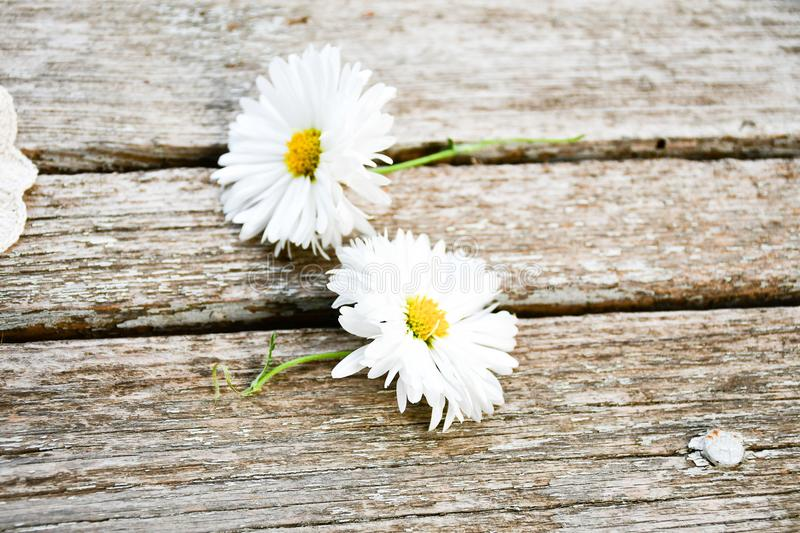 White daisy flower. On a wooden background. Greeting card background ,empty space for text stock image