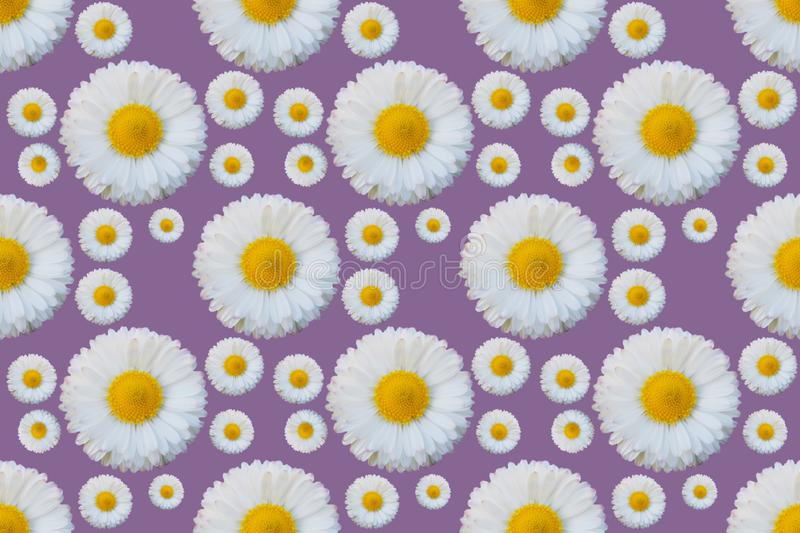 White daisy flowers pattern royalty free illustration