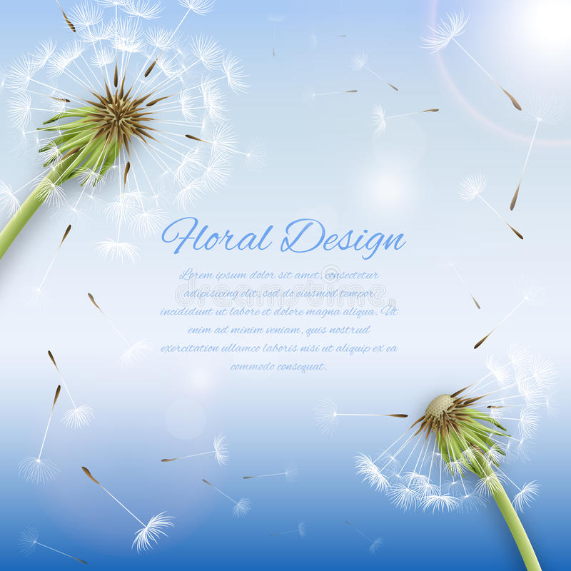 White dandelion with pollens background vector illustration