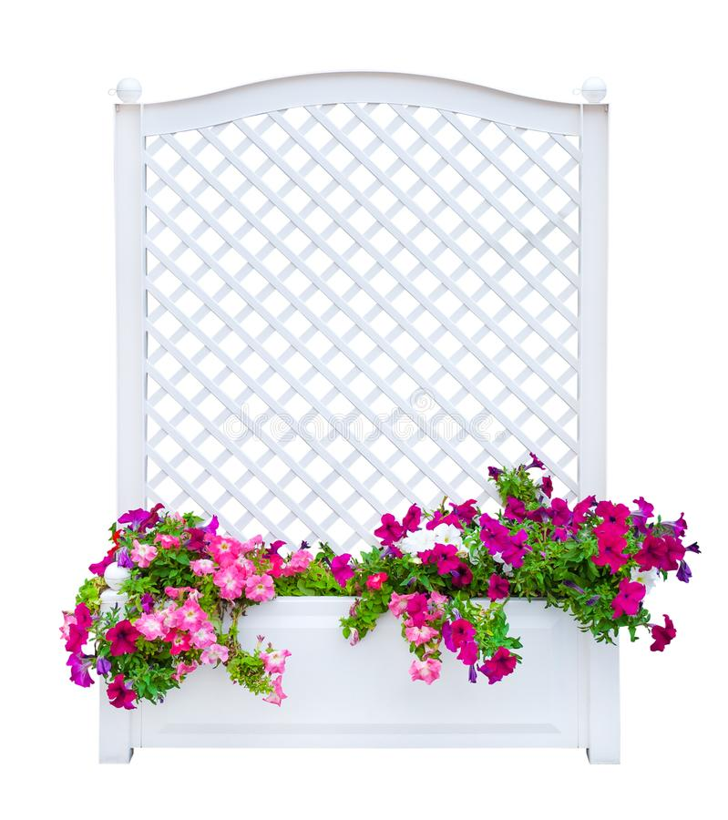 White decorative lattice for plant with pink petunias flowers, isolated royalty free stock image