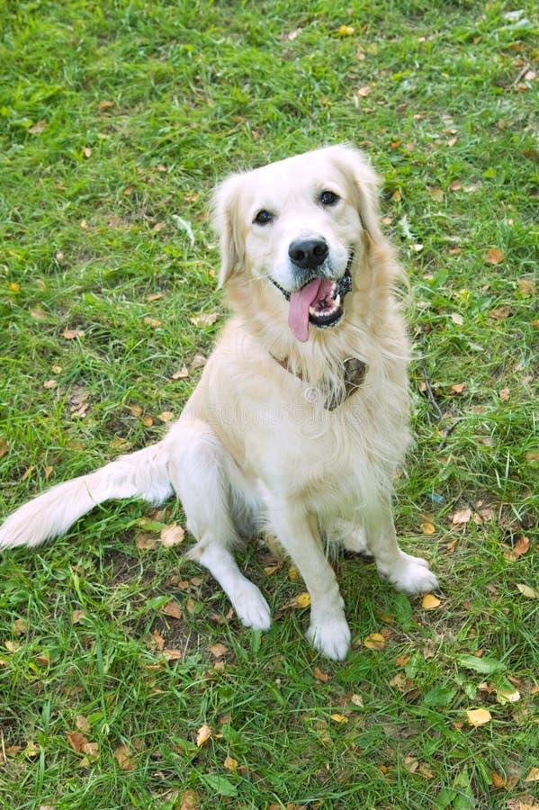 Free White Dog Stock Photography - 18067352