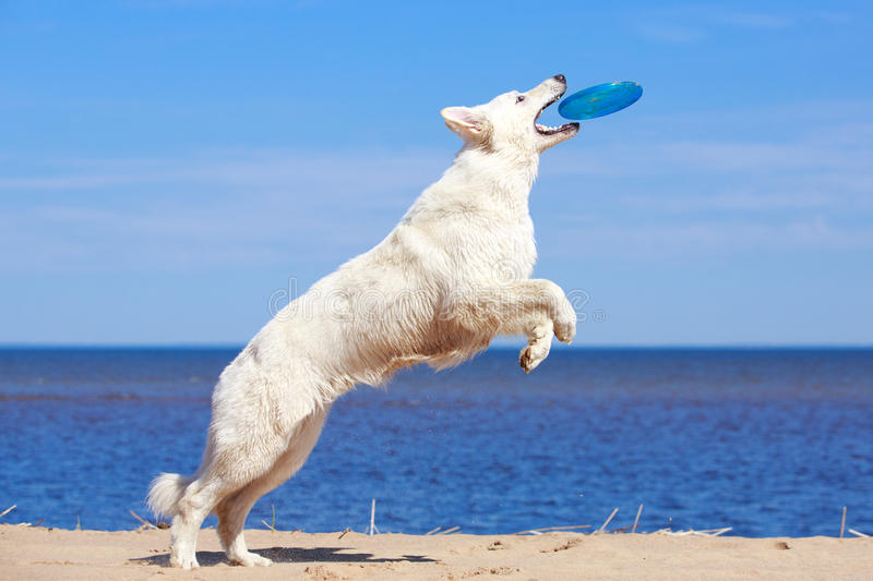 Download White Dog On The Beach Stock Images - Image: 31385924