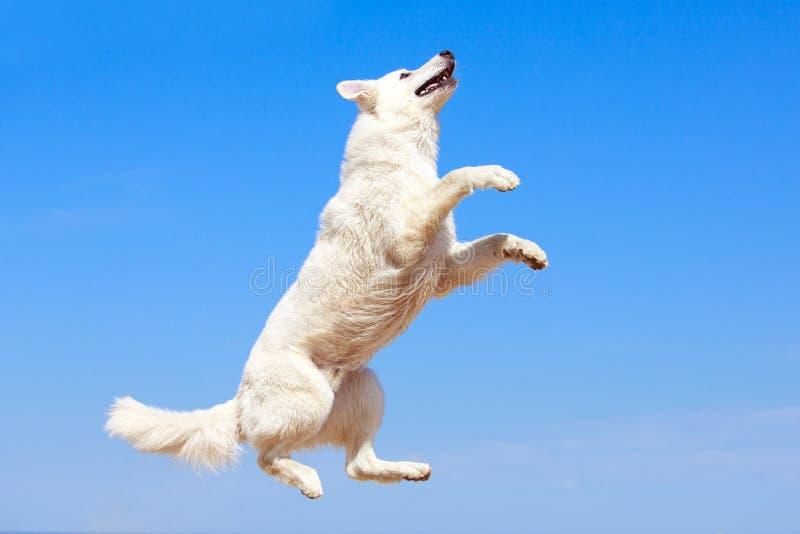 White Dog On The Beach Stock Photos