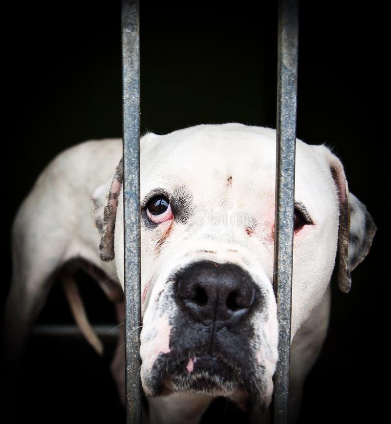 White dog behind girds. stock photo