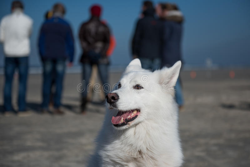 White dog with people stock photo