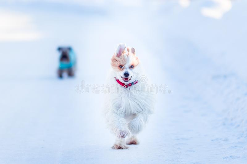 White dog in sunny day royalty free stock photos