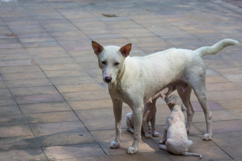 White dog and two baby royalty free stock photography