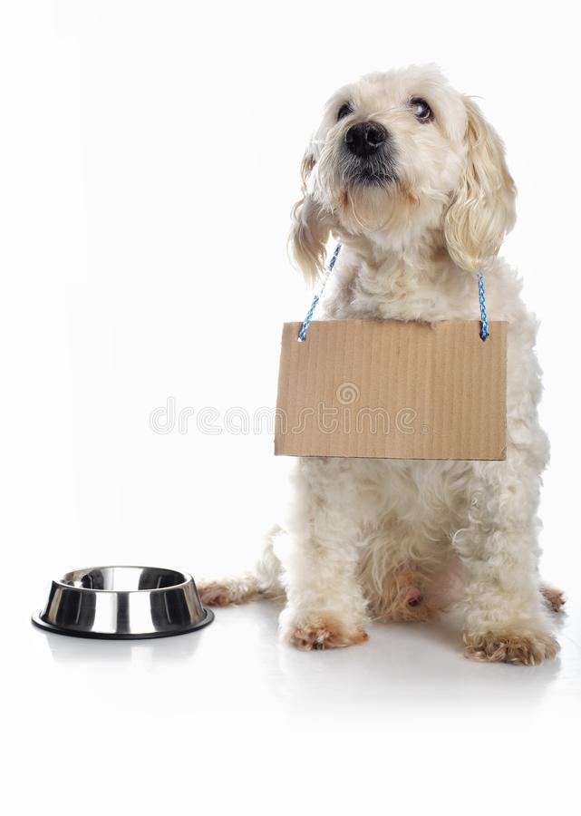 White dog waiting for food royalty free stock photos