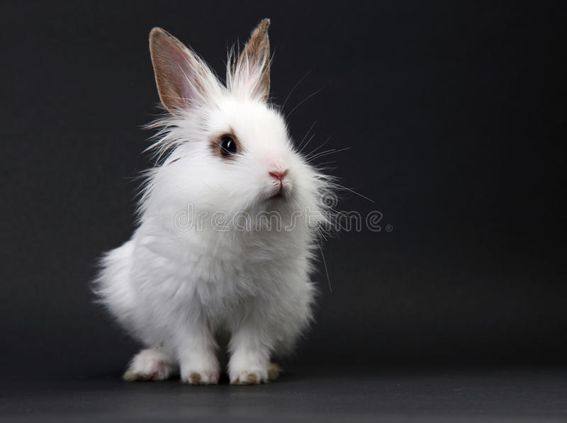 Download White domestic baby-rabbit stock image. Image of domestic - 14852321