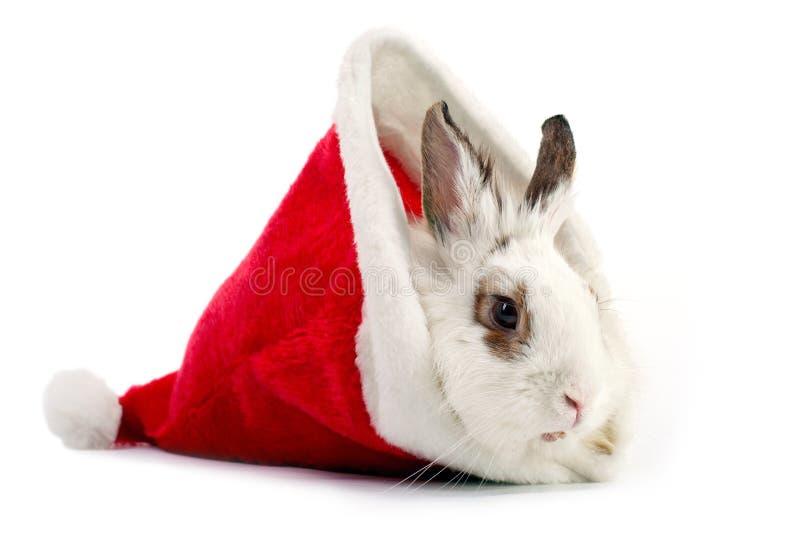 White domestic rabbit in Santa hat stock image