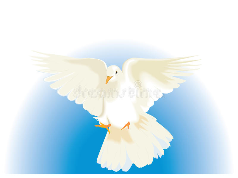 Download White Dove stock vector. Image of white, peace, wedding - 11916023