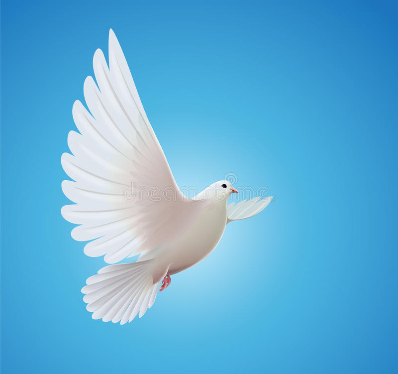 White dove. Vector illustration of beautiful shiny white dove flying way up in a blue sky