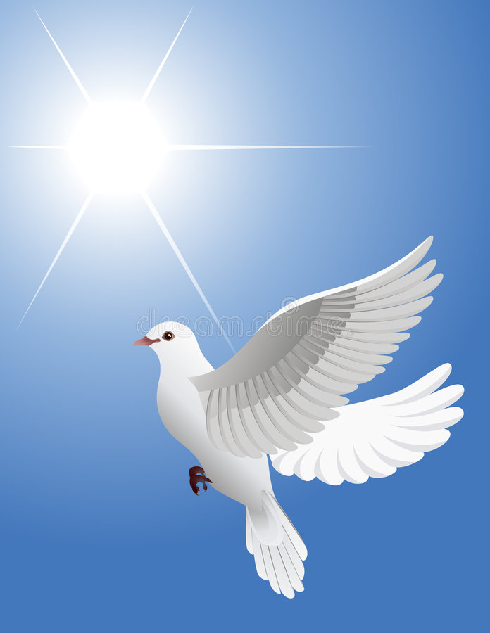 Download White dove stock vector. Image of light, purity, pigeon - 6315514