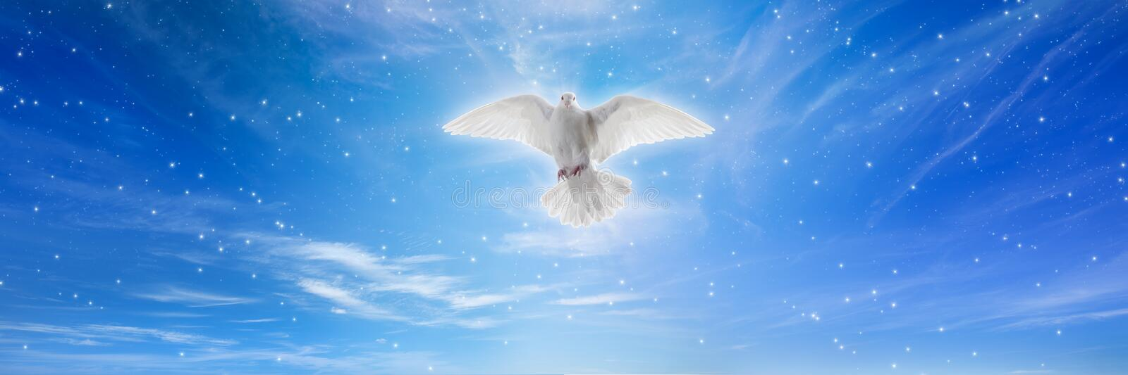 White dove in blue skies royalty free stock photo