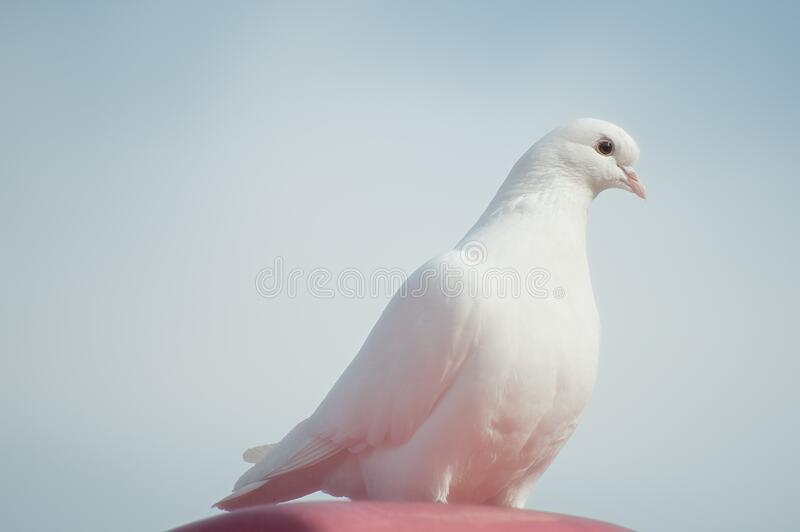 White Dove On Brown Surface Under Blue Sky Free Public Domain Cc0 Image