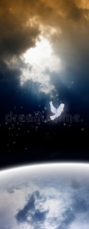 White dove from heaven stock photos