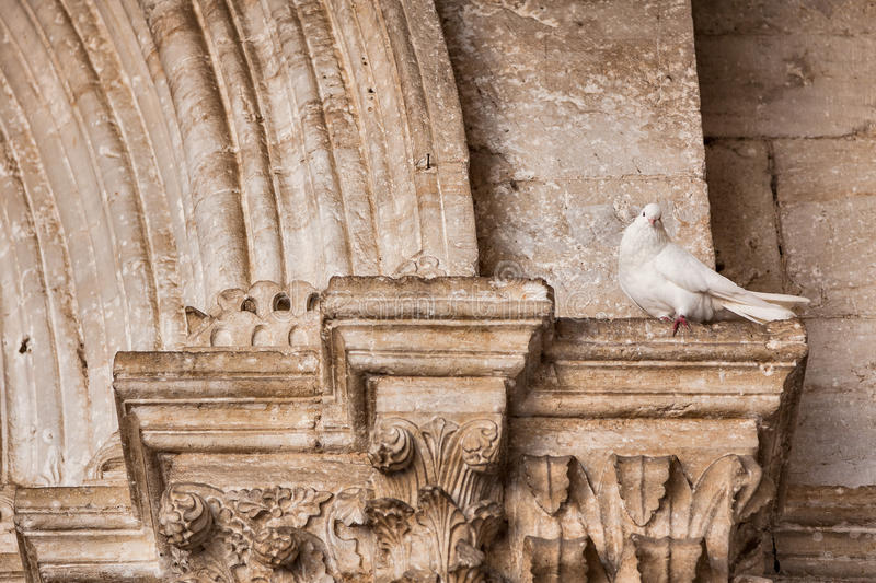 White dove laying on the capital. Of a column royalty free stock image