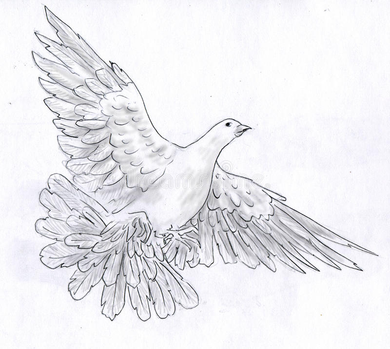 White dove - pencil sketch. White dove - symbol of peace - spread it's wings flying. Pencil drawing, sketch vector illustration