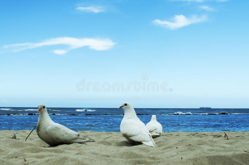 White dove in the sea a symbol of peace stock photos