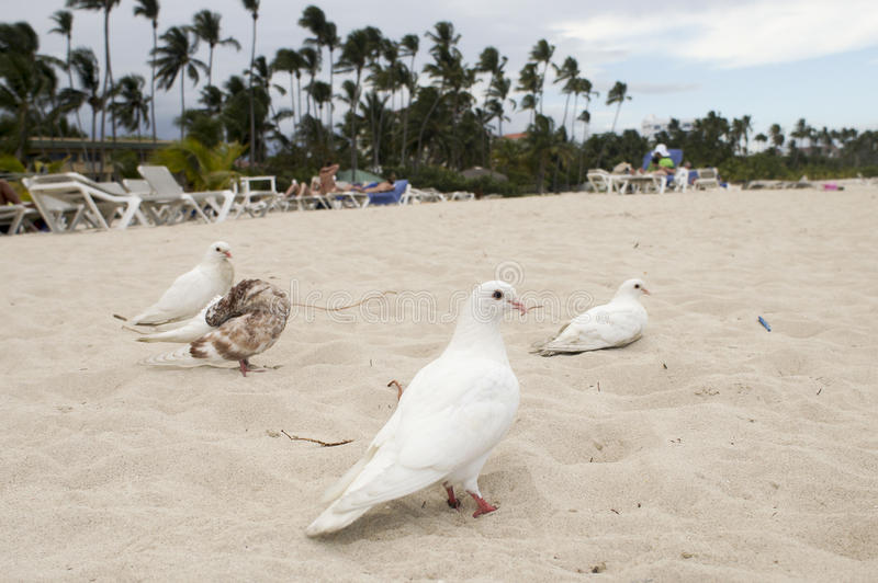 White dove in the sea a symbol of peace stock image