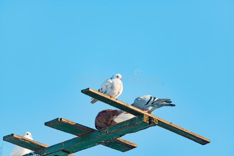 White dove sits on top of the feeder royalty free stock image