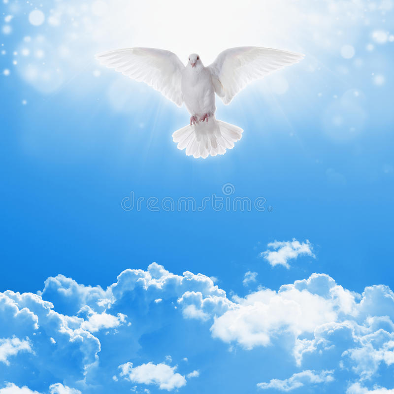 White dove in skies royalty free stock photos