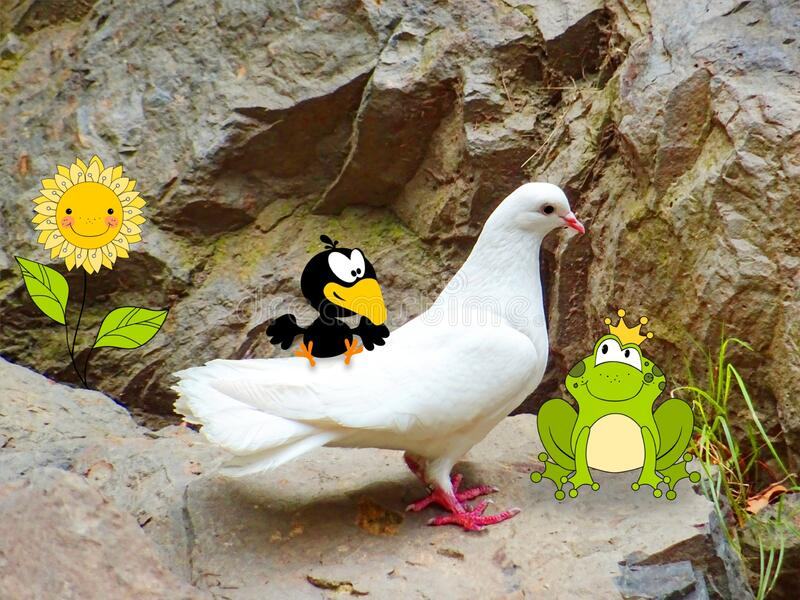 White dove on a stone with cartoon bird, frog prince and smiling sunflower. Photography combined with drawings stock images