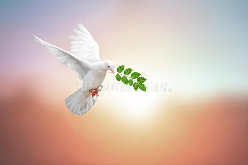 White Dove on vintage stock images