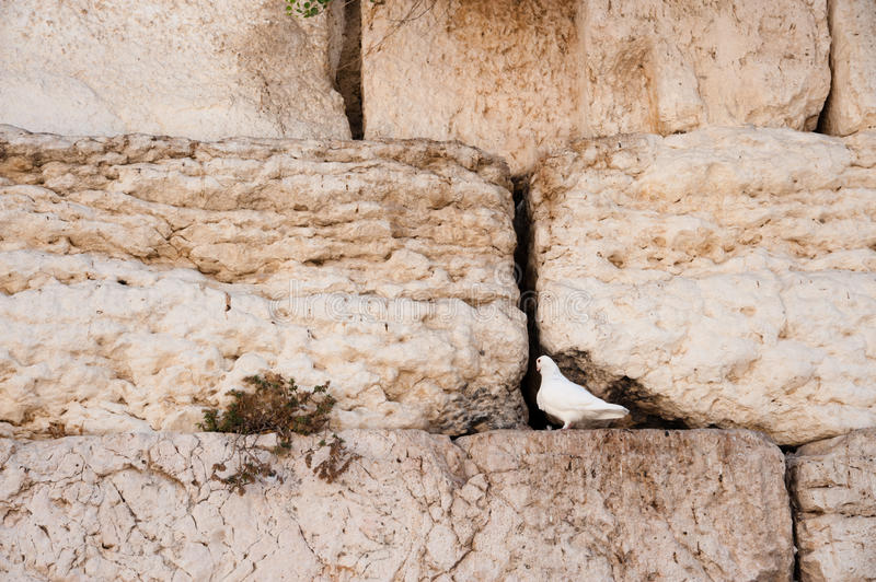 Download White Dove at Western Wall stock image. Image of dove - 21299685