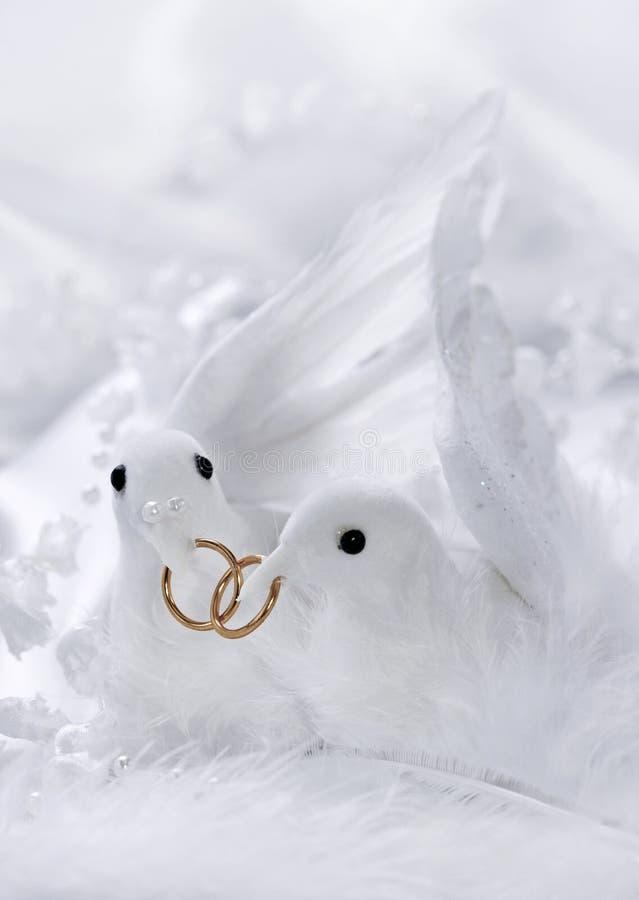 White doves stock image