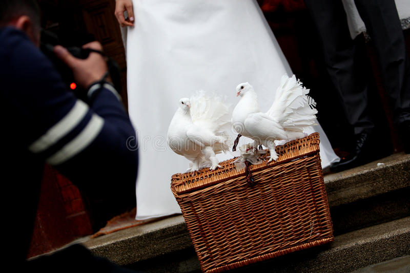 White Doves and a wedding couple. White Dove Releases for weddings, two doves sitting on a basket stock photo