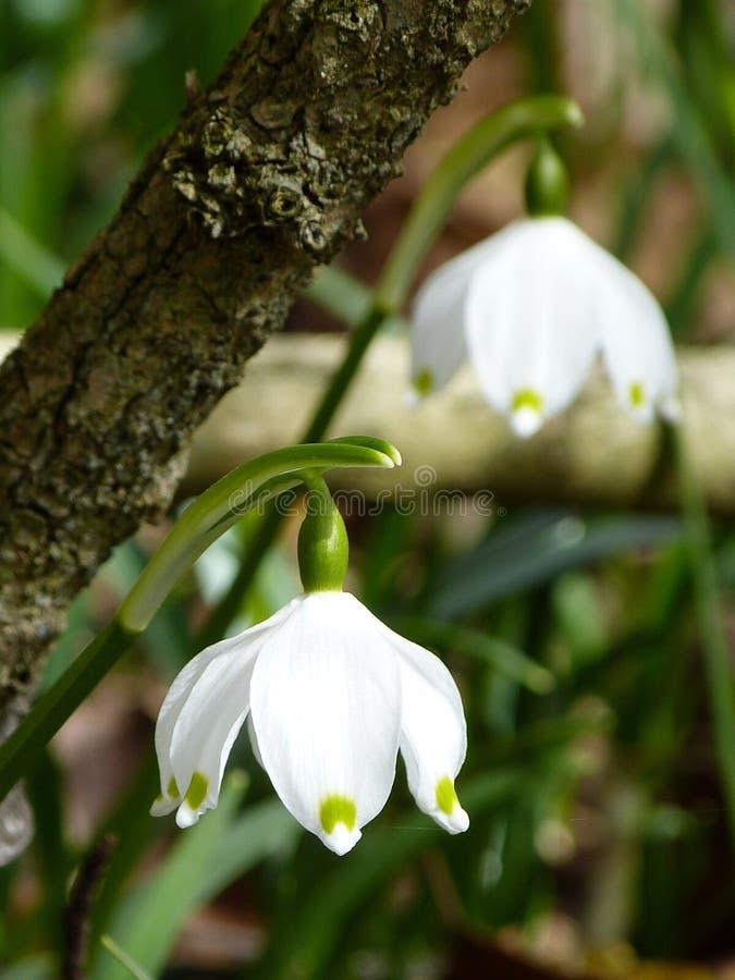 White Down Facing Flower Free Public Domain Cc0 Image