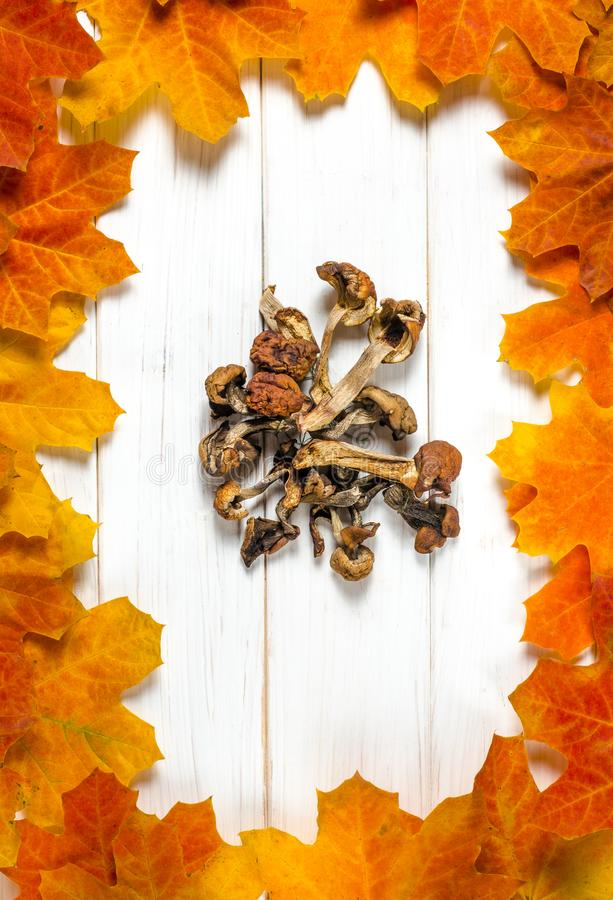 white dried mushrooms lie on a white wooden table on a background of yellow maple leaves stock image