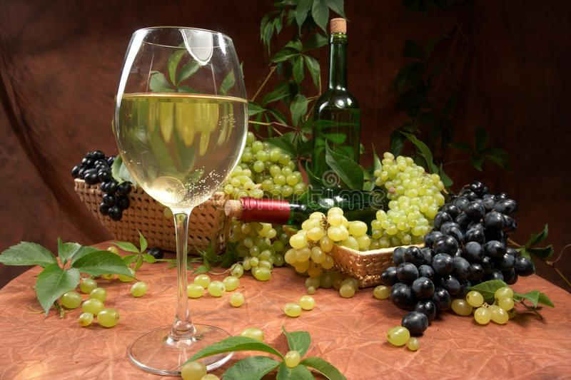 Download White dry wine stock image. Image of lifestyle, grapevine - 14154763