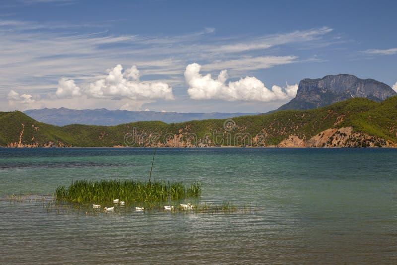 Download White Ducks In Beautiful Lake Stock Image - Image: 31282563