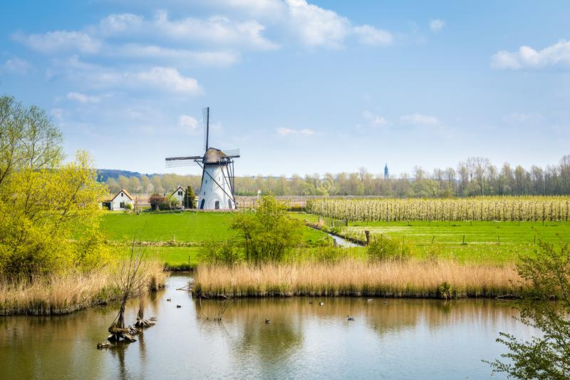 White Dutch windmill landscape. White Dutch windmill near Kesteren in Gelderland in the Netherland stock photo