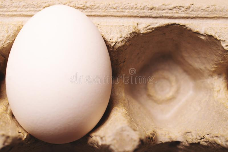 White egg in carton box stock image