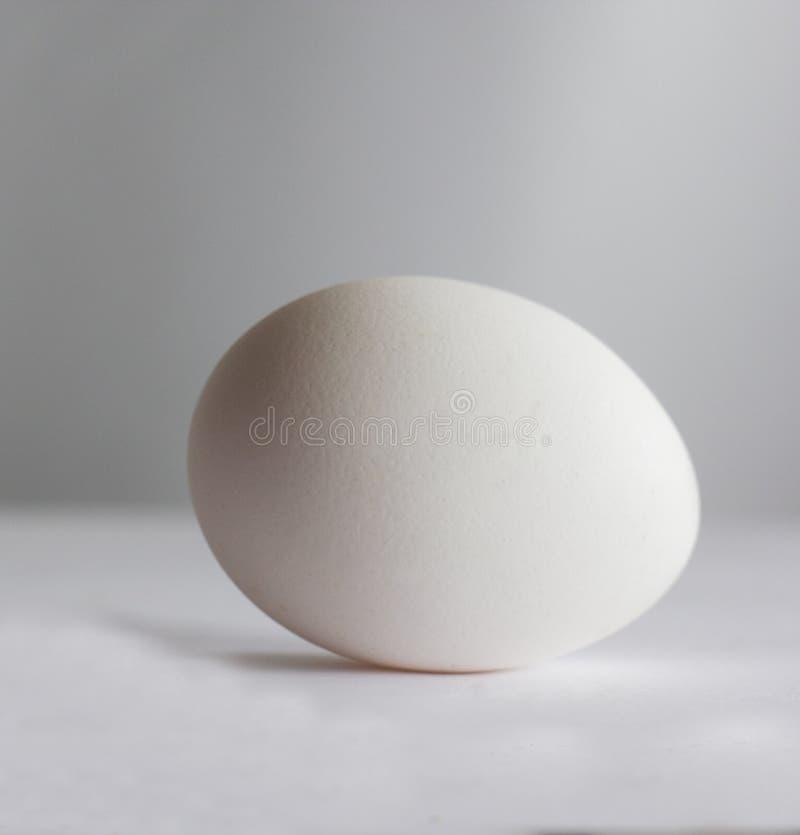 White Egg royalty free stock images