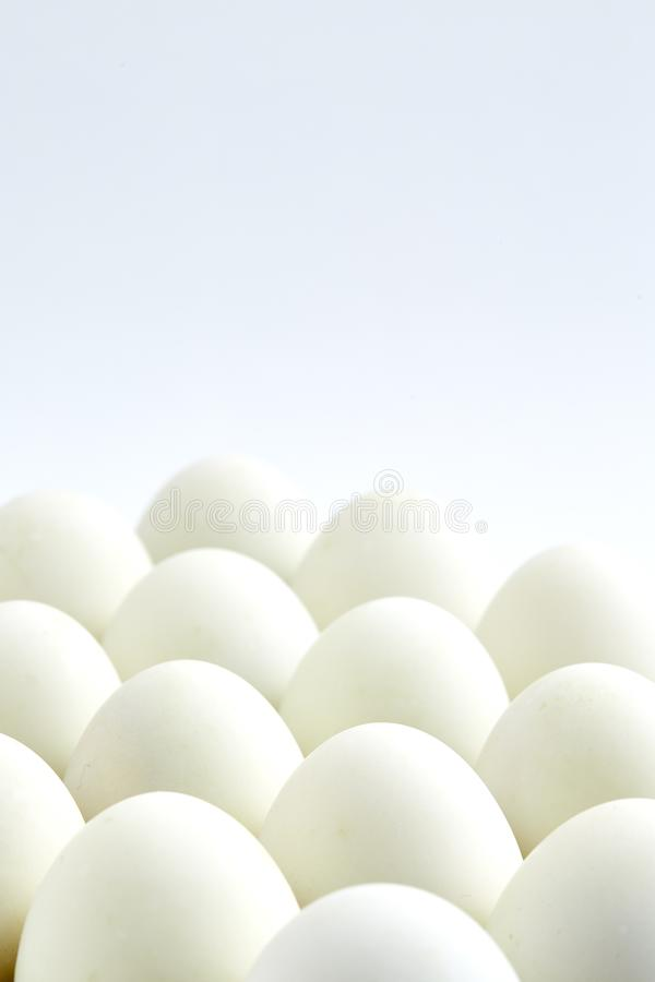 white eggs on a white background royalty free stock image