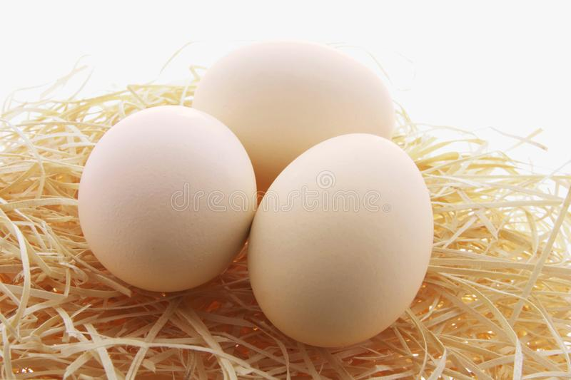 White Eggs on Straw Nest royalty free stock images