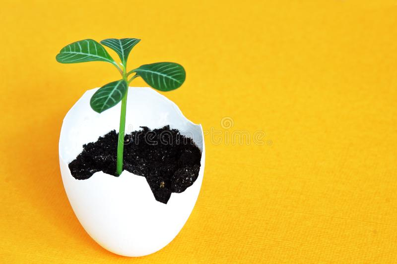 Green young sprout in white eggshell on bright yellow background. Easter concept. Minimal concept with copy space stock photos