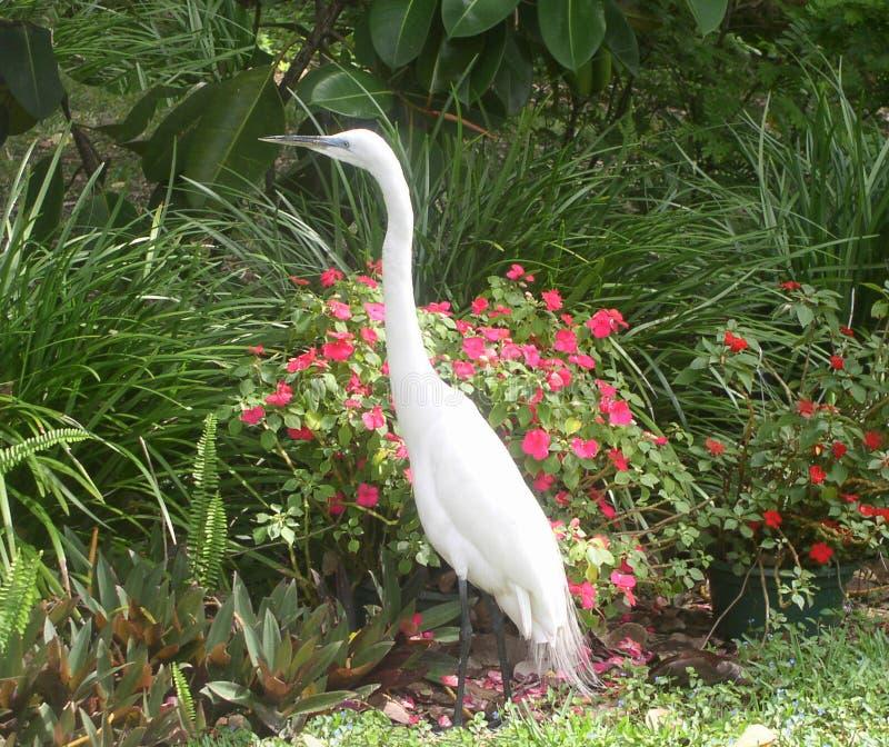 Download White Egret Stock Images - Image: 17584