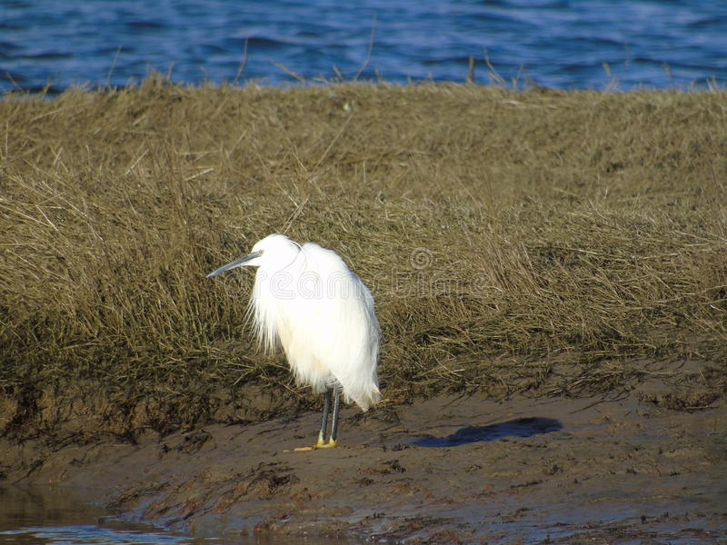 White egret in yellow shoes royalty free stock photography