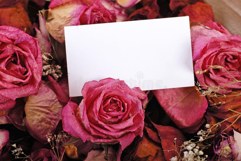 Download White Empty Card With Dried Roses Stock Image - Image: 26639665