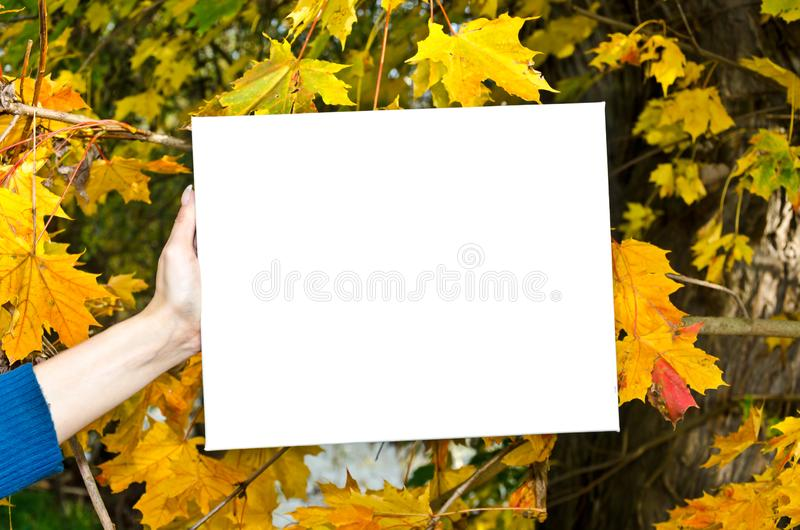 White empty signboard in front of colorful autumn leaves stock photography