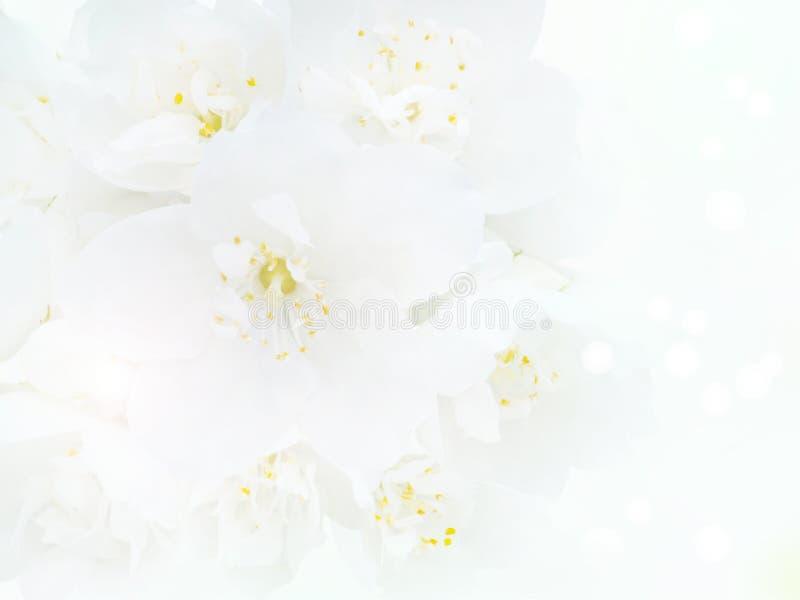 White English Dogwood Flowers Bouquet Background Stock Photo - Image ...