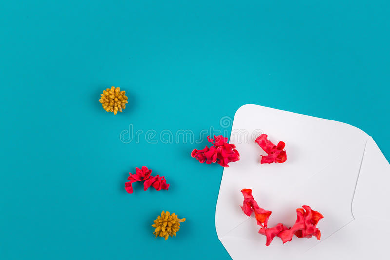 White envelop and colorful dried flowers, plants on blue background. Top view, flat lay. White open envelop and colorful dried flowers, plants on blue background stock photos