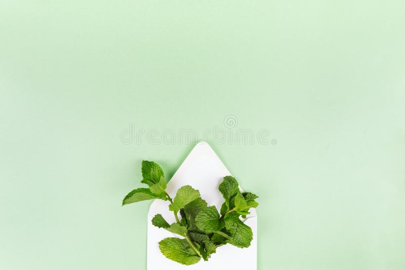 White envelope with mint leaves on the trendy solid green backdrop stock photography