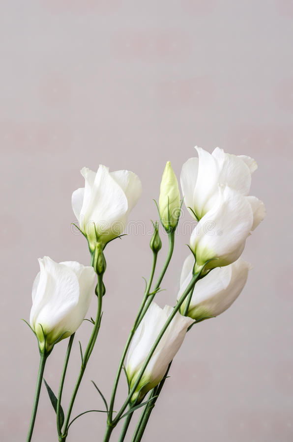 White eustoma flowers bouquet. Indoor pink background royalty free stock photos